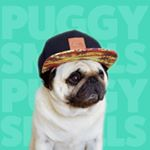 Avatar of Puggy Smalls