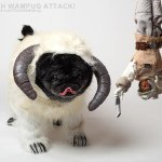 Avatar of Chubbs The Wampug